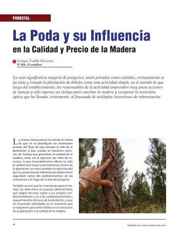 La Poda y su Influencia - Revista El Mueble y La Madera