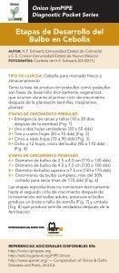 Etapas de Desarrollo del Bulbo en Cebolla - Page 2