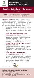 Etapas de Desarrollo del Bulbo en Cebolla - Page 4