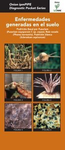 Etapas de Desarrollo del Bulbo en Cebolla - Page 7