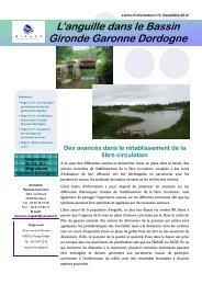 Lettre d'information anguille n°9 - Migado