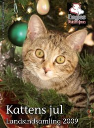 Kattens jul - Inges Kattehjem
