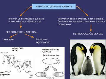 Reprodución animais
