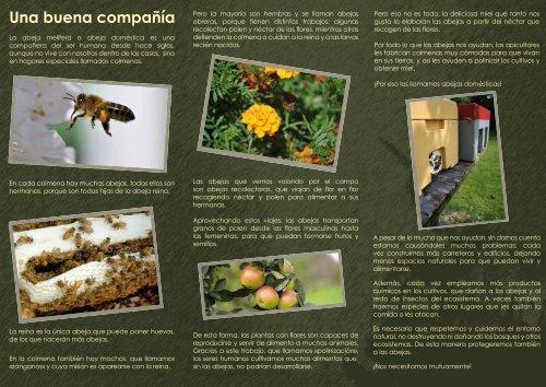 La abeja doméstica (Nivel 1, infantil) - apolo