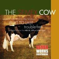 THE SEMEX COW