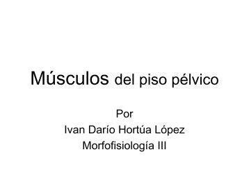 Músculos del piso pélvico - Pilates JULIAN PERSONAL TRAINER
