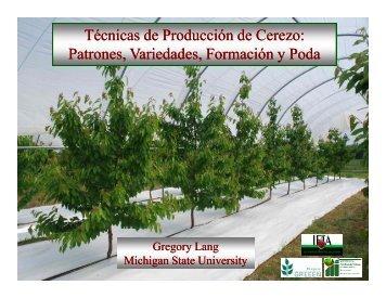 Técnicas de Producción de Cerezo: Patrones, Variedades ... - unifrut