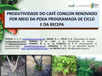 produtividade do café conilon renovado por meio da poda ...