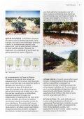 Poda da Mangueira - of /docsagencia - Embrapa - Page 5