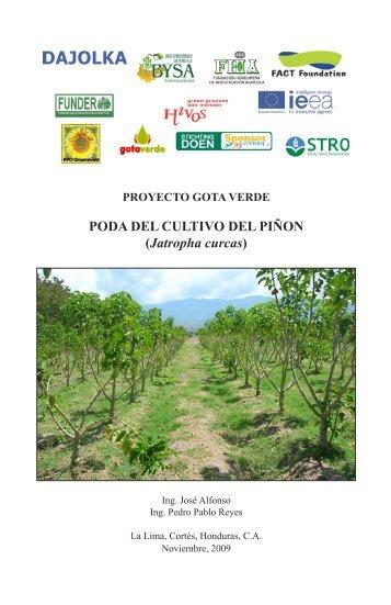 FHIA Manual de Poda del Pinon - Gotaverde.org