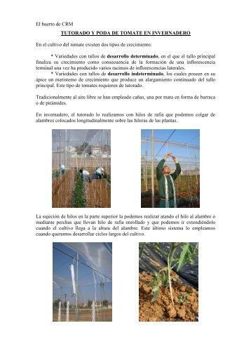 Boletín nº 10. Tutorado y poda de tomate en invernadero