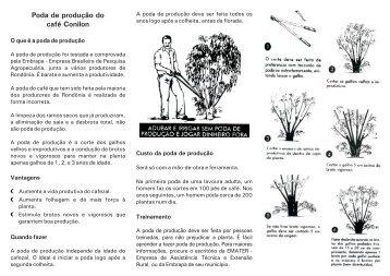 Poda de produção do café Conilon - Embrapa Rondônia