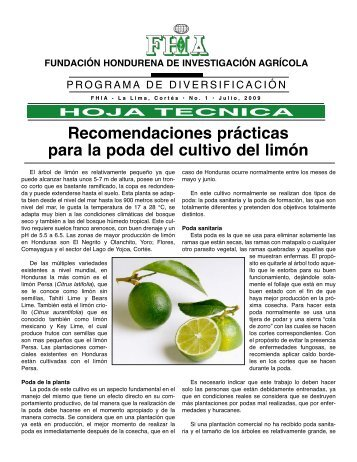 Recomendaciones prácticas para la poda del cultivo del limón - FHIA
