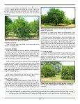 Recomendaciones prácticas para la poda del cultivo del limón - FHIA - Page 2