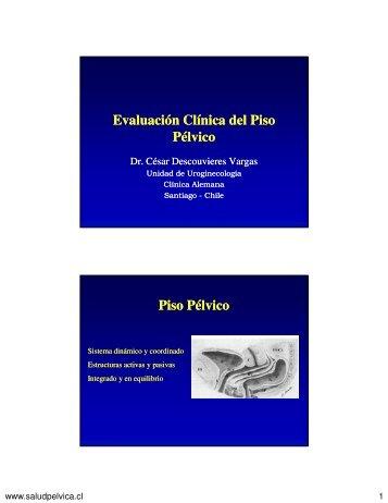Piso pélvico: sistema dinámico y coordinado - Saludpelvica.cl