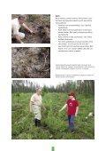 Pidä huolta metsästäsi - Tapiola - Page 6