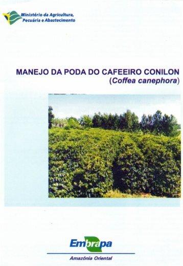 MANEJO DA PODA DO CAFEEIRO CONILON (Coffea canephora)