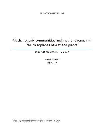 Methanogenic communities and methanogenesis in the rhizoplanes ...