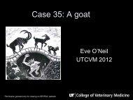 Case 35: A goat