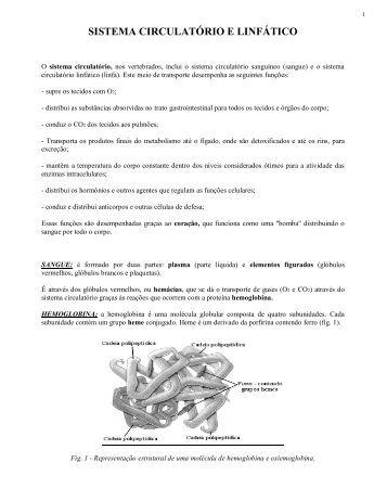 sistema circulatório e linfático - Laboratório de Biologia - IFSC