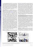 Nitrosopumilus maritimus genome reveals unique - de la Torre ... - Page 4