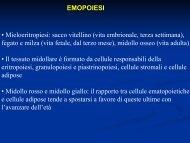 Anemie emolitiche - laprimapietra - Altervista