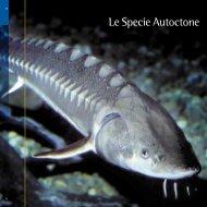 Le Specie Autoctone - Provincia di Treviso - Pesca