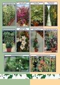 Vivaismo Verde Pubblico Paesaggismo Vivaismo Verde Pubblico ... - Page 4