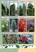 Vivaismo Verde Pubblico Paesaggismo Vivaismo Verde Pubblico ... - Page 5
