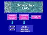 gli ecosistemi lacustri - Provincia di Terni