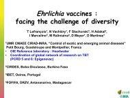 Inactivated vaccine - Caribvet