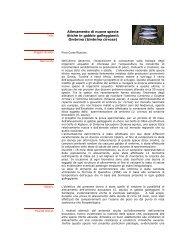 Allevamento di nuove specie ittiche in gabbie galleggianti: Ombrina ...