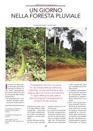 Un giorno in foresta pluviale - Studio Romiti Legno