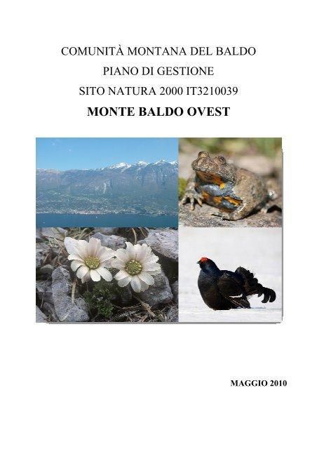 """Pinus mugo /""""rigi/"""" montagna Pini-varietà dalla Svizzera pianta trasformati,"""