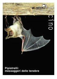 Pipistrelli: messaggeri delle tenebre - Pro Natura Ticino