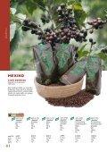 Kaffee 65 AGENDA - El Puente - Seite 7