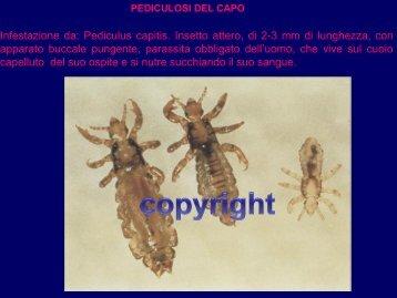 Il trasferimento di Elena Malysheva su parassiti in un corpo umano - Striscia piccole larve