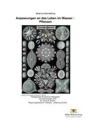 Anpassungen an das Leben im Wasser - Pflanzen