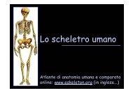 Lo scheletro umano - Università degli Studi della Tuscia