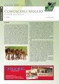 Caccia - Associazione Cacciatori Bellunesi - Page 4