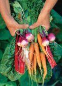 Paradossi alimentari e corretti stili di vita in una società ... - Barilla CFN - Page 6