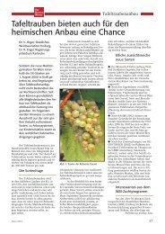 Tafeltrauben bieten auch für den heimischen Anbau eine Chance