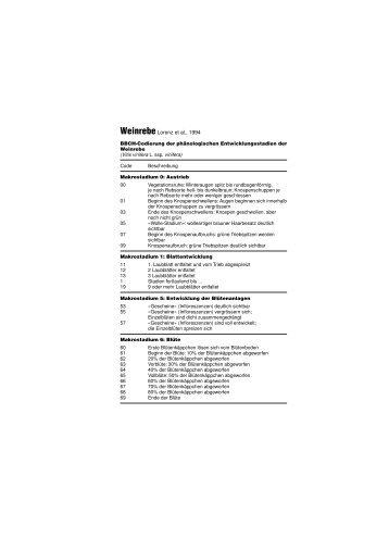 Entwicklungsstadien der Rebe (BBCH Code)