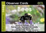 Observer-Bees-ebook-v4DL