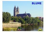Methodische Arbeitsschritte nach 5 Jahren ... - Sidi Blume
