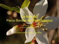La flora del Parco fluviale del Padrongianus