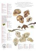 Ons voorbeeld is de natuur - SOMSO - Page 6
