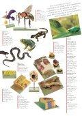 Ons voorbeeld is de natuur - SOMSO - Page 7