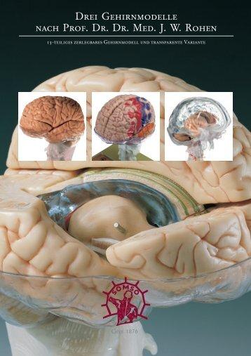 Drei Gehirnmodelle nach Prof. Dr. Dr. Med. J. W. Rohen - SOMSO