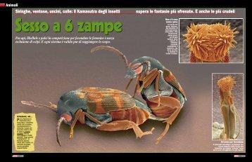 Siringhe, ventose, uncini, colle: il Kamasutra degli insetti ... - Focus